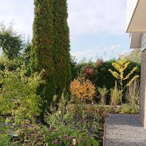 plantaardig, tuin reeuwijk tuinontwerp, herfstkleur